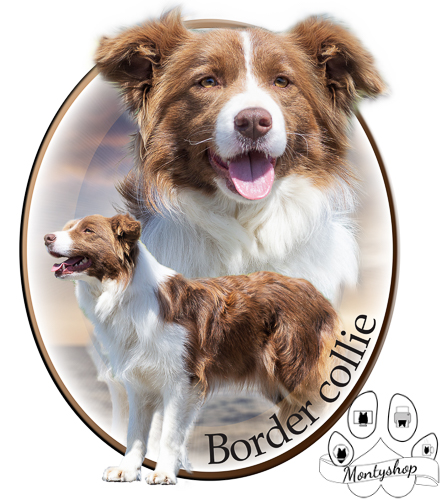 Border collie č.1 s textem