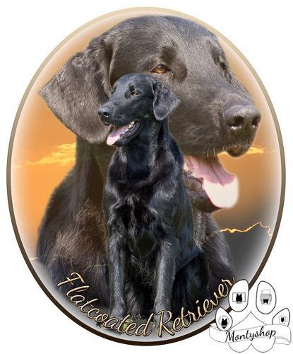 Flat coated retriever č.1 s textem