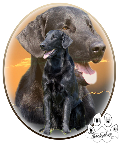 Flat coated retriever č.1