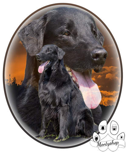 Flat coated retriever č.2