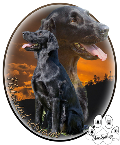 Flat coated retriever č.3 s textem