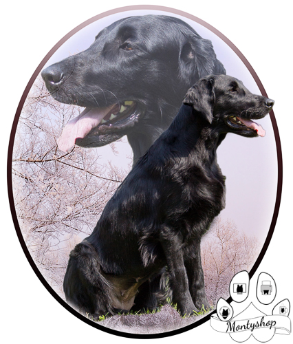 Flat coated retriever č.4