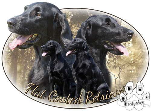 Flat coated retriever č.5 s textem
