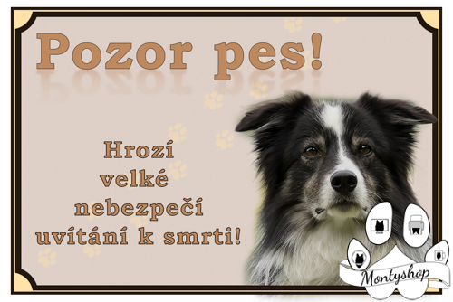 Border collie č.2 – vítání