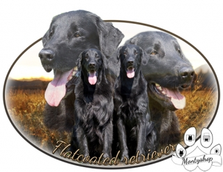 Flat coated retriever č.6 s textem