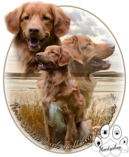Nova scotia duck tolling retriever č.1 s textem