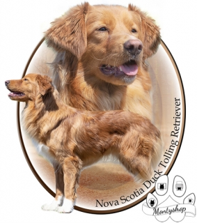 Nova scotia duck tolling retriever č.2 s textem