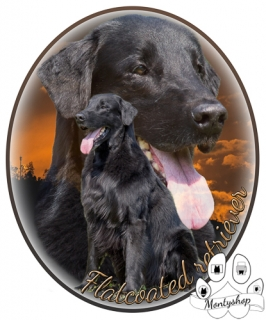 Flat coated retriever č.2 s textem