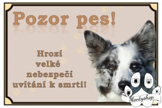 Border collie č.3 – vítání