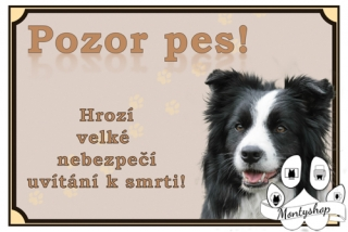 Border collie č.4 – vítání