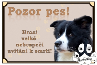 Border collie č.1 – vítání